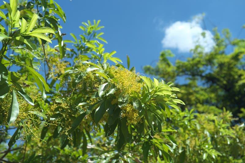 Um tiro de uma planta esse que semeia algo fotografia de stock royalty free