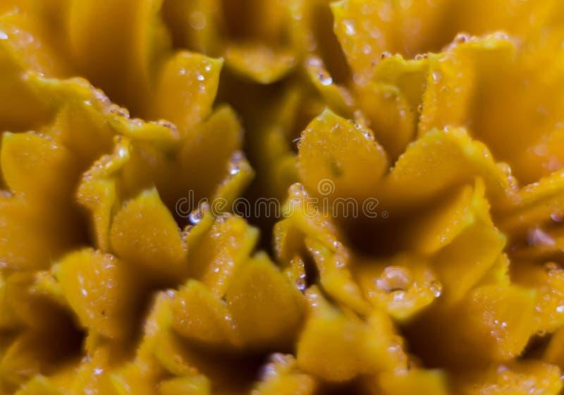 Um tiro próximo da flor amarela imagens de stock royalty free