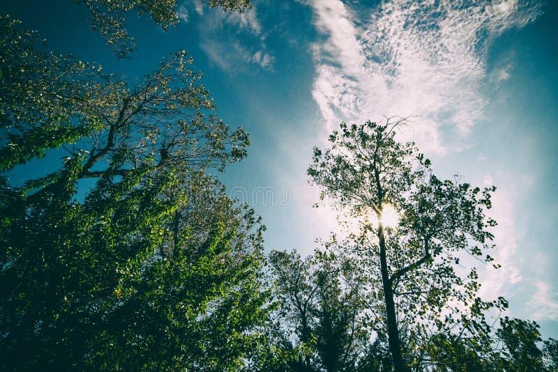 Um tiro retro da floresta abaixo de um céu azul profundo imagens de stock royalty free