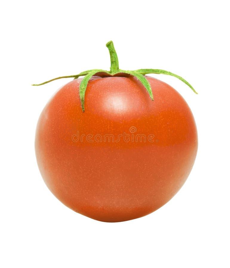 Um tomate foto de stock