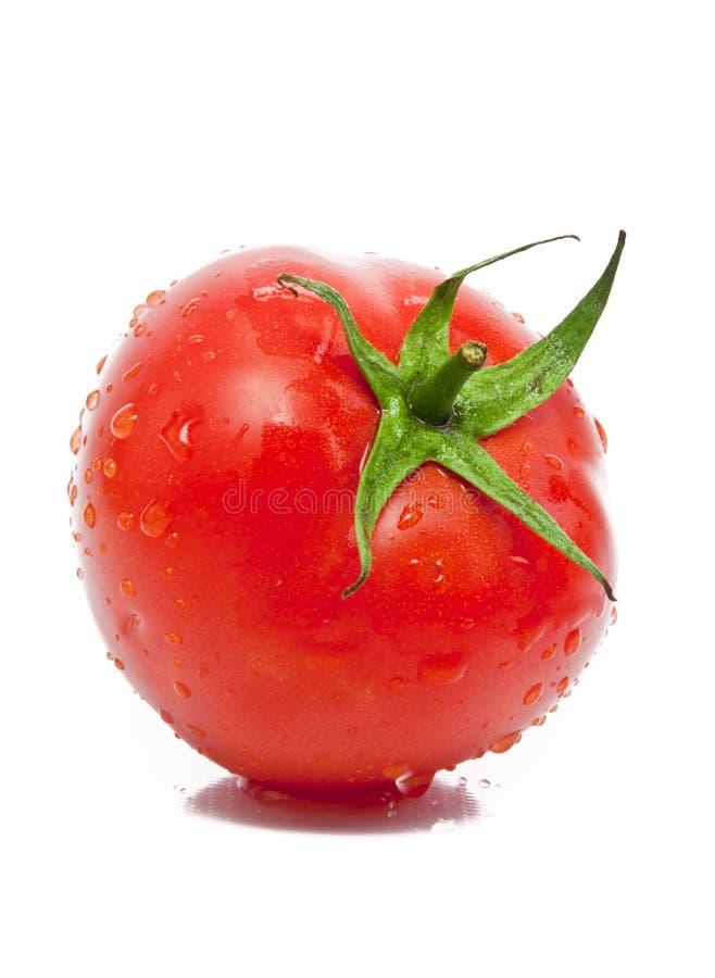 Um tomate molhado fresco fotos de stock