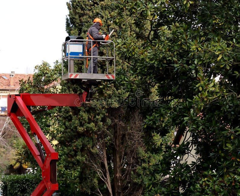 Um trabalhador com uma serra de cadeia poda as árvores de uma plataforma aérea foto de stock