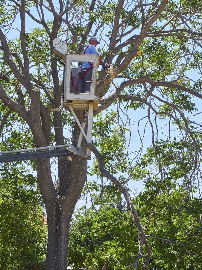 Um trabalhador que poda uma árvore na altura fotografia de stock