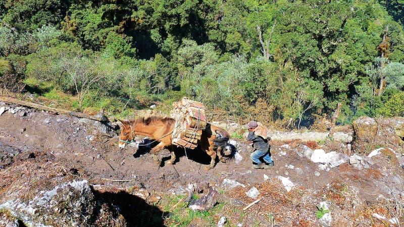 Um trabalho muito duro na Guatemala fotos de stock