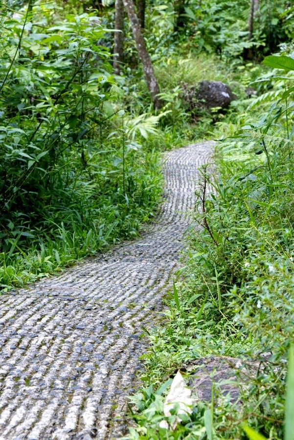 Um trajeto completamente em uma floresta úmida verde imagens de stock royalty free