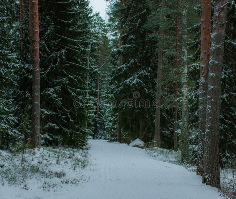 Um trajeto congelado na floresta fotografia de stock royalty free