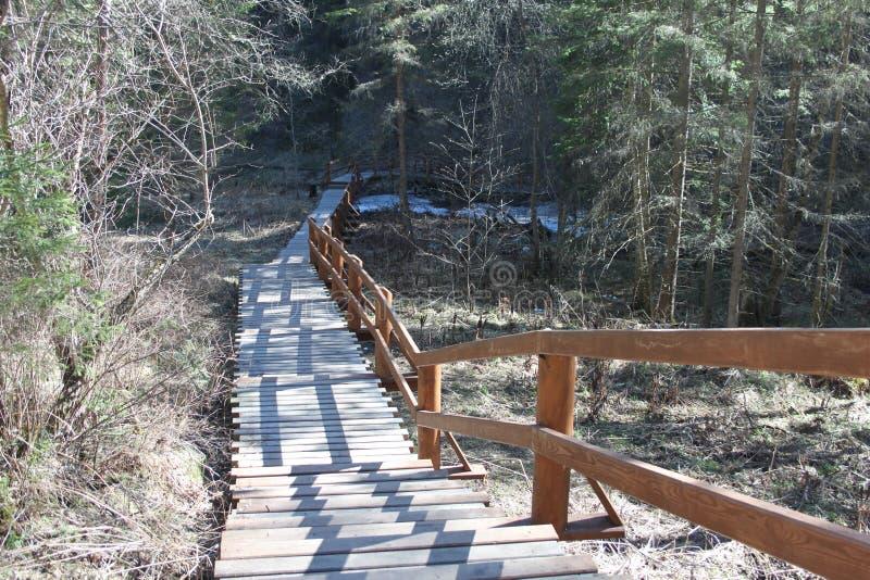 Um trajeto ecológico para pedestres sob a forma das escadas de madeira na floresta conífera no território de Krasnoyarskie stolby fotografia de stock