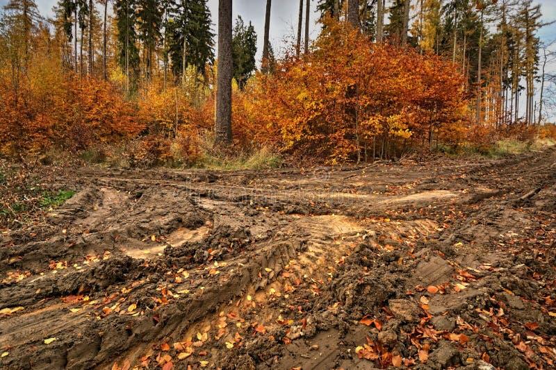 Um trajeto enlameado na floresta colorida do outono fotografia de stock