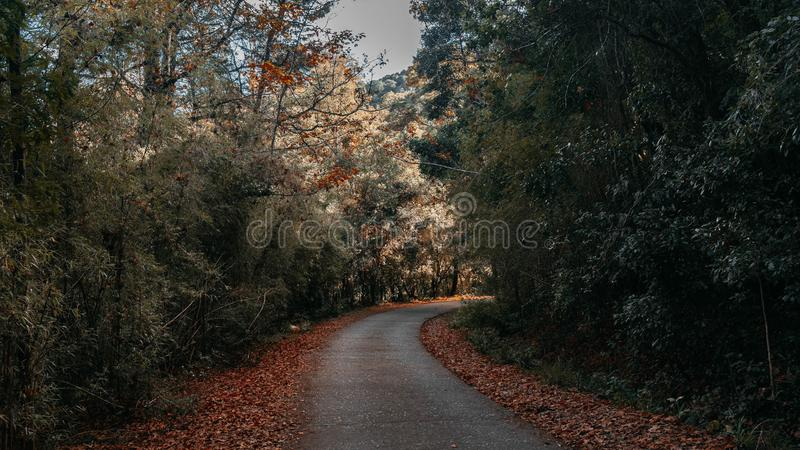 Um trajeto na floresta imagem de stock royalty free