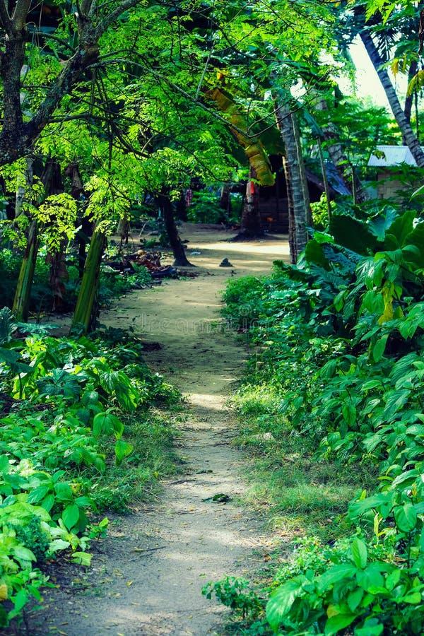 Um trajeto na selva na ilha de Havelock fotografia de stock royalty free