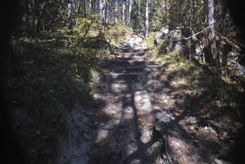 um trajeto pequeno com as escadas de madeira na floresta imagem de stock
