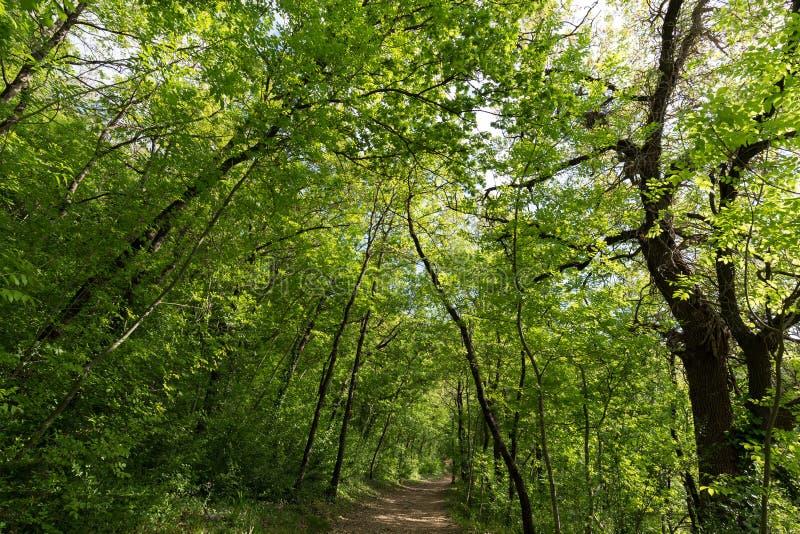 Um trajeto pequeno que corre através de uma madeira, com as árvores bonitas, luxúrias fotografia de stock royalty free
