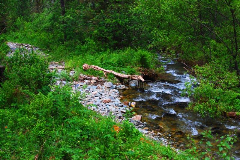 Um trajeto a um rio da montanha em uma floresta fotos de stock