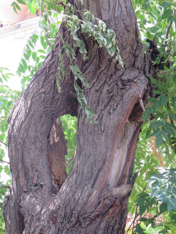 Um tronco de árvore com um furo fotos de stock royalty free