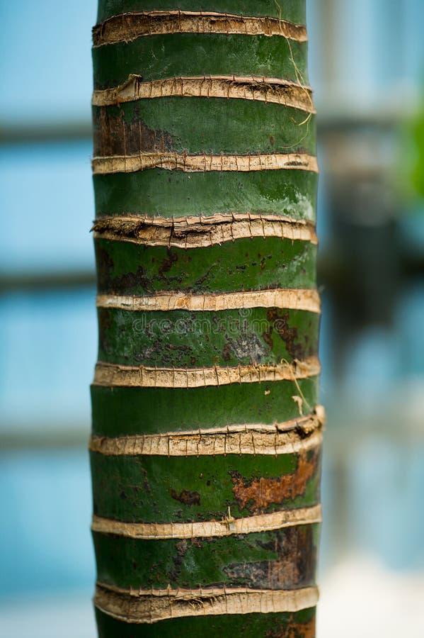 Um tronco de palmeira fotos de stock