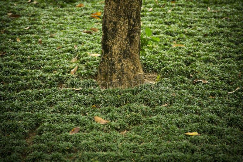Um tronco solitário de uma árvore entre a grama imagem de stock royalty free