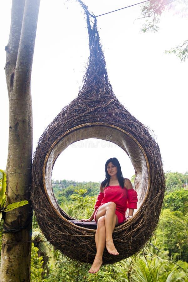 Um turista fêmea está sentando-se em um grande ninho do pássaro em uma árvore na ilha de Bali fotografia de stock
