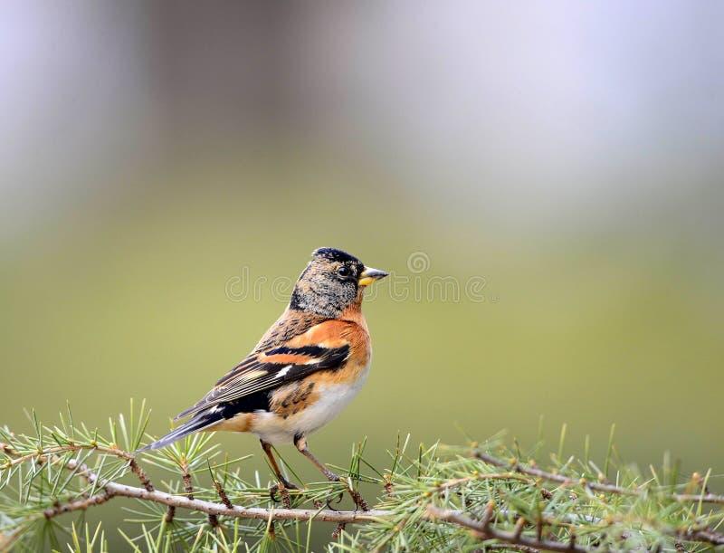 Download Pássaros foto de stock. Imagem de foraging, vôo, pássaros - 29846866