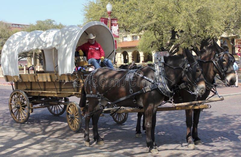 Um vagão coberto, uma equipe da mula e um motorista imagens de stock