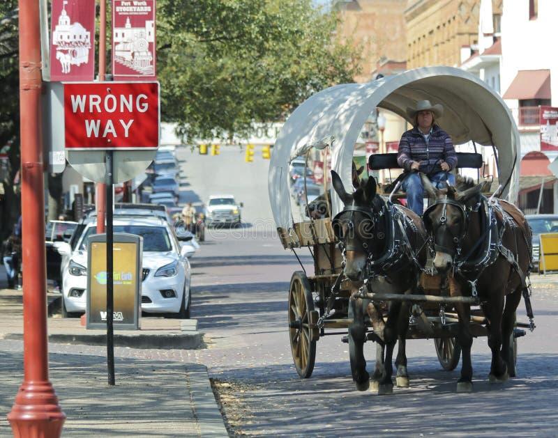 Um vagão coberto, uma equipe da mula e um motorista fotos de stock royalty free