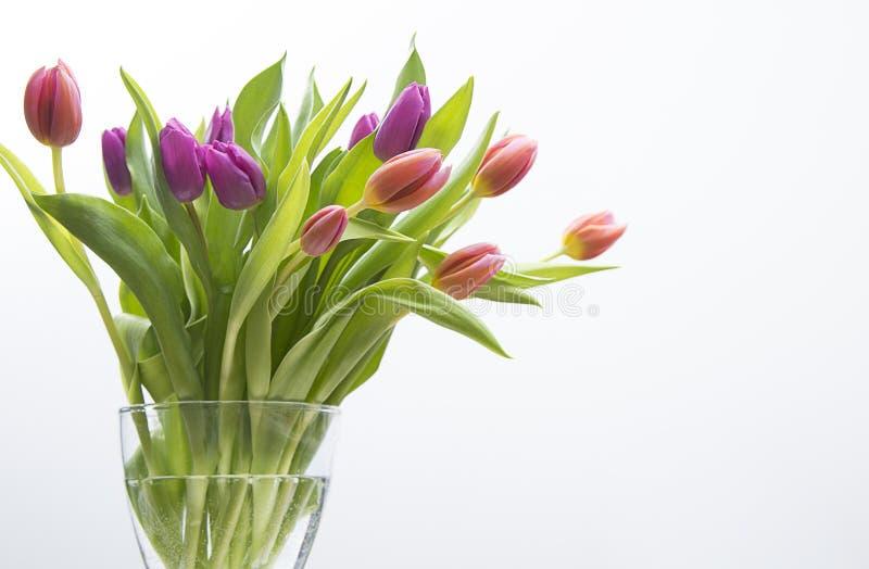 Um vaso da tulipa colorida imagem de stock royalty free
