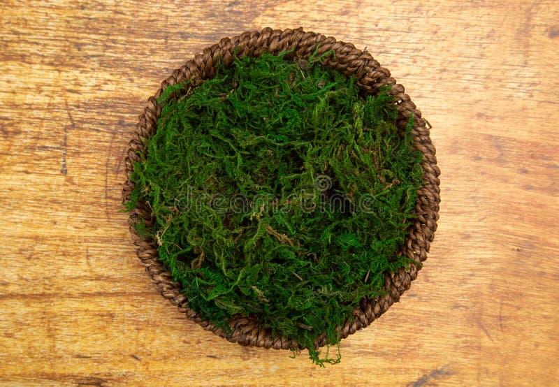 Um verde Moss Digital Newborn Backdrop do círculo para fotógrafo recém-nascidos fotos de stock royalty free
