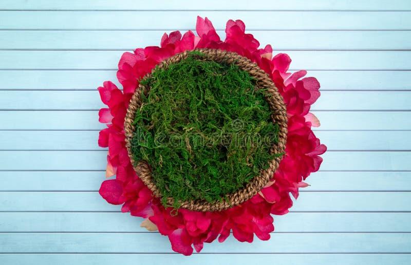 Um verde Moss Digital Newborn Backdrop do círculo para fotógrafo recém-nascidos fotografia de stock