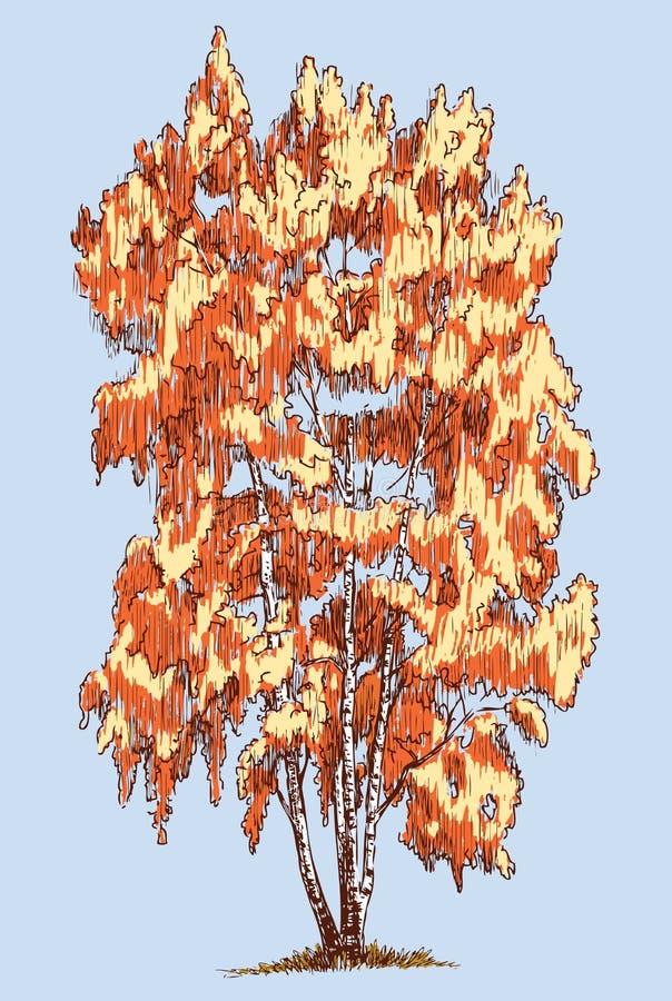 Um vidoeiro na estação do outono ilustração royalty free