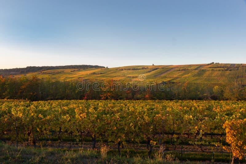 Um vinhedo colorido no outono em França foto de stock royalty free