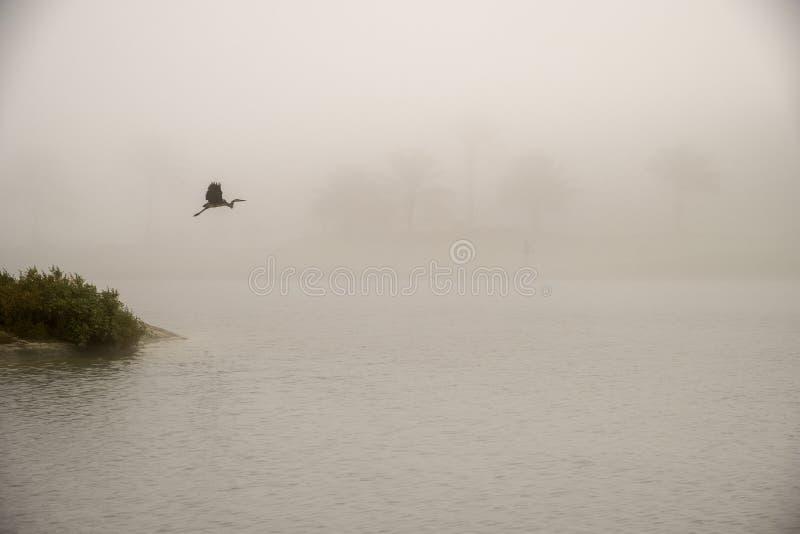 Um voo bonito do guindaste de Sandhill no ambiente nevoento em Saadiy foto de stock