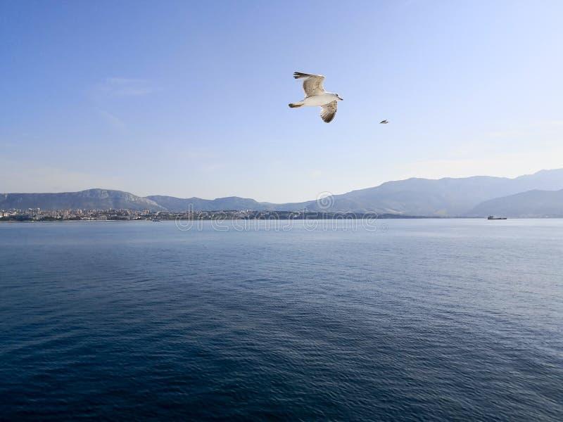 um voo da gaivota sobre o mar de adriático no por do sol foto de stock royalty free
