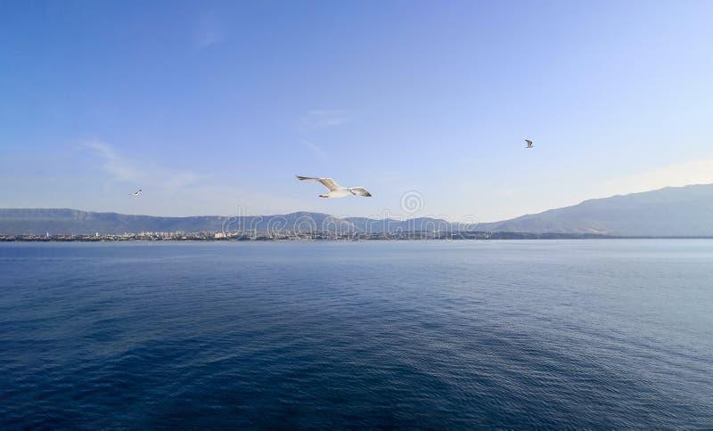 um voo da gaivota sobre o mar de adri?tico no por do sol fotos de stock