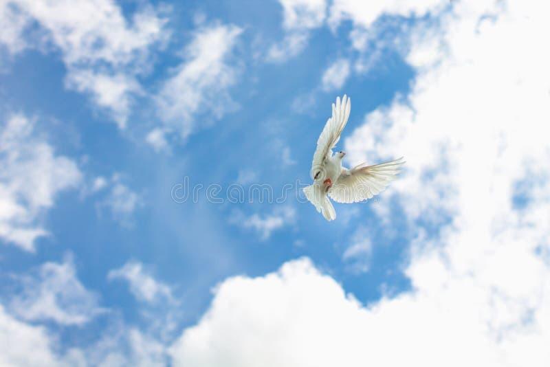 Um voo da pomba no céu azul imagem de stock royalty free