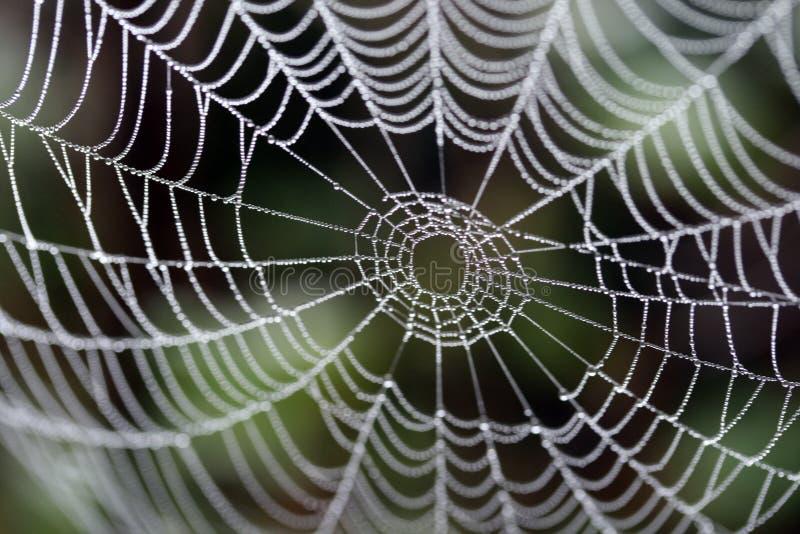 Um Web de aranha fotografia de stock