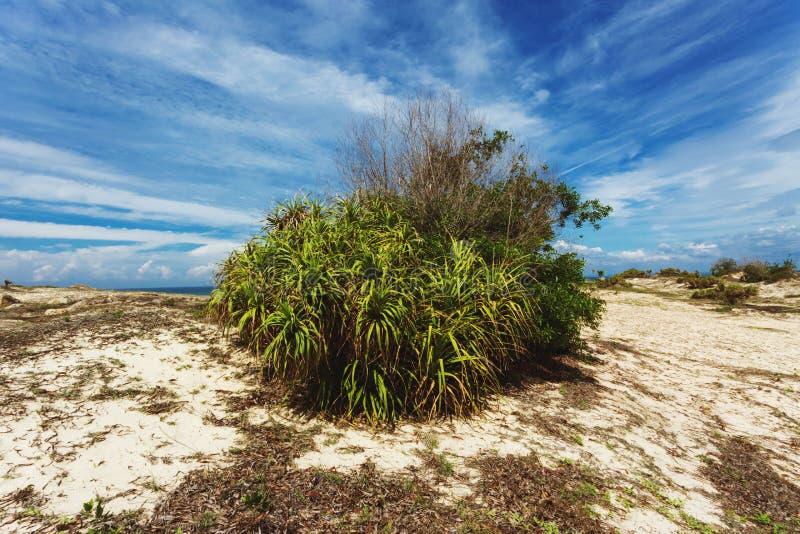 Uma área branca da duna do deserto, Mui Ne, Phan Thiet, Vietname imagens de stock royalty free