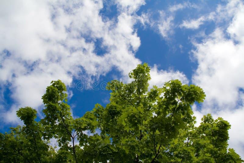 Uma árvore é um bordo fotos de stock royalty free