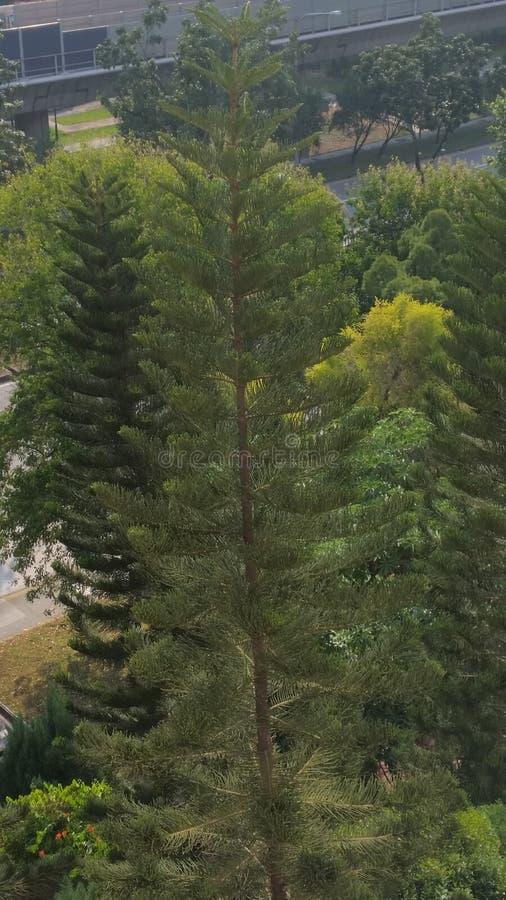 Uma árvore imagens de stock