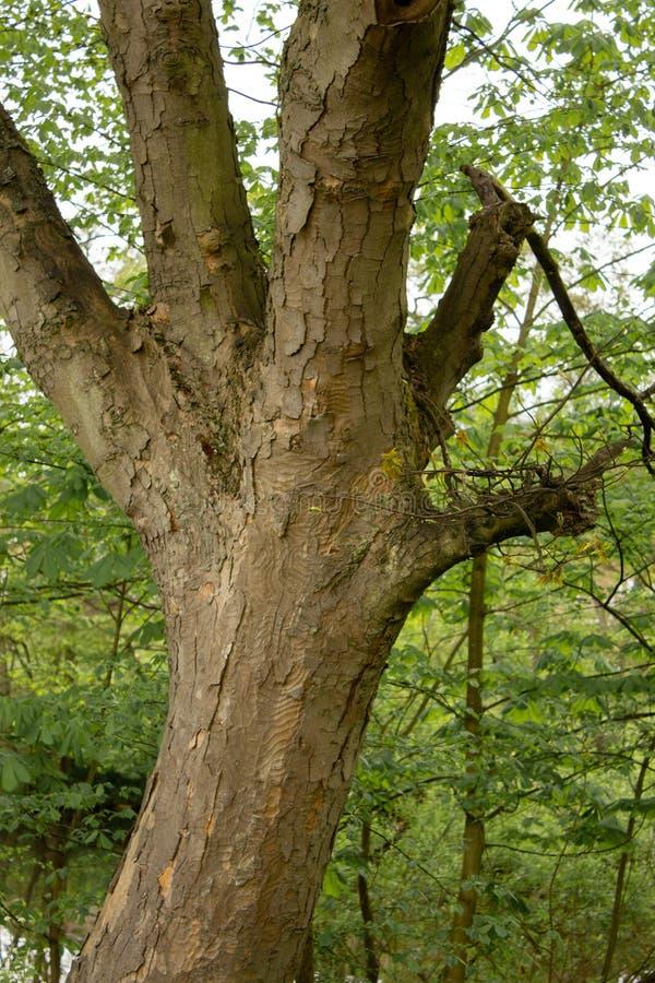 Uma árvore acessível fotografia de stock