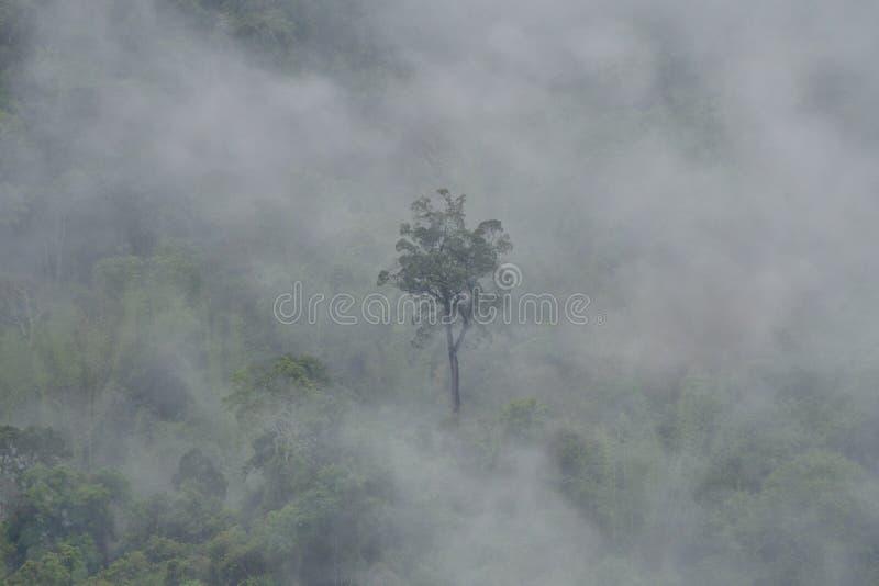 uma árvore alta na névoa que cobre as florestas da montanha fotos de stock