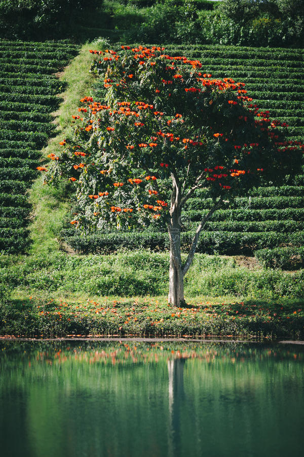 Uma árvore bonita no lago fotografia de stock