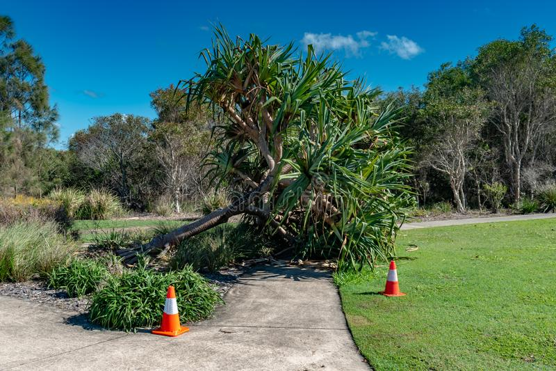 Uma árvore caída causa um perigo em um passeio local foto de stock