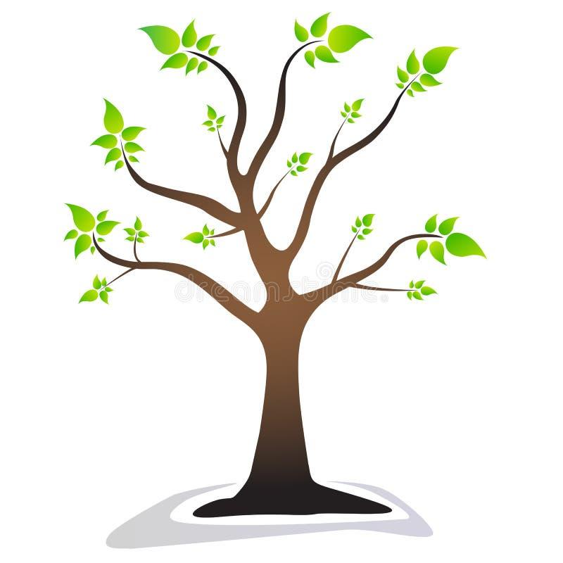 Uma árvore com as folhas verdes das folhas Árvore bonita ilustração stock