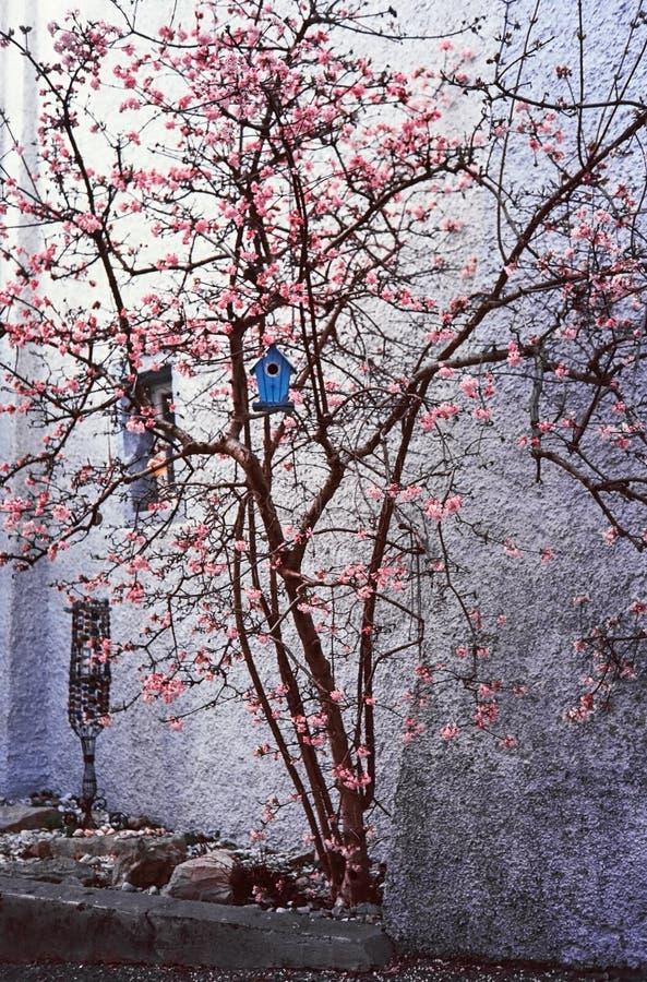 Uma árvore com uma casa do pássaro na cidade suíça medieval de Kaiserstuhl, tiro com fotografia análoga do filme imagens de stock royalty free