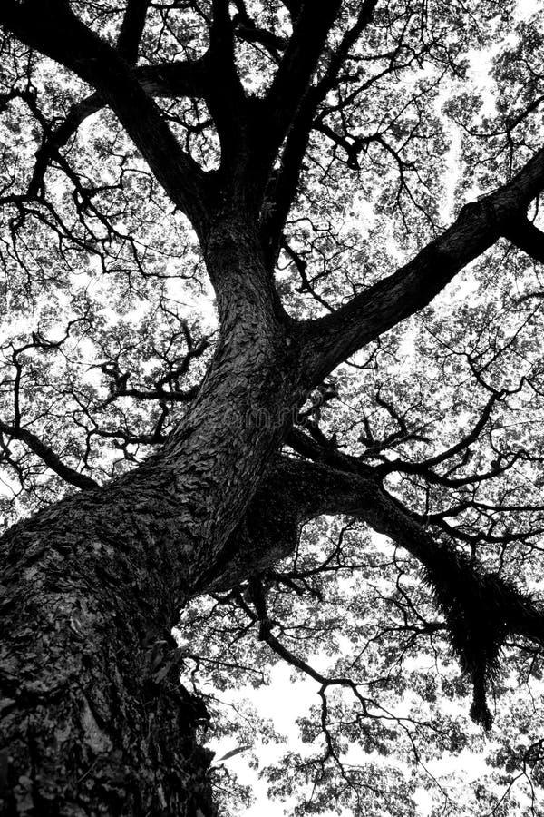 Árvore de vida foto de stock royalty free
