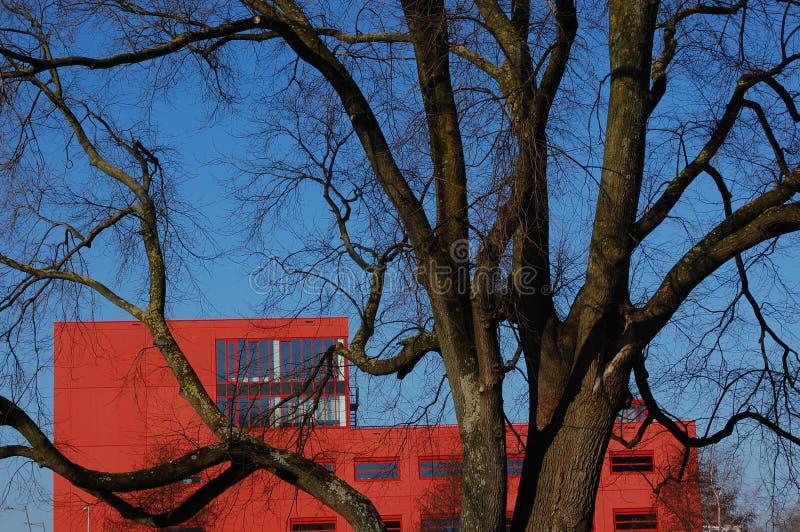 Uma árvore com um prédio de escritórios imagens de stock royalty free