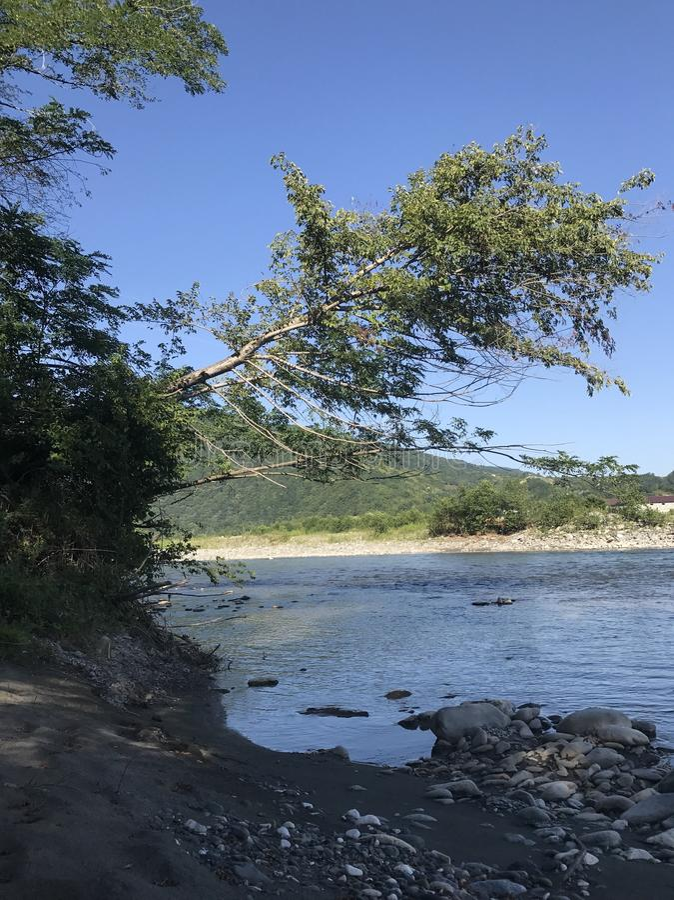 Uma árvore curvada foto de stock royalty free