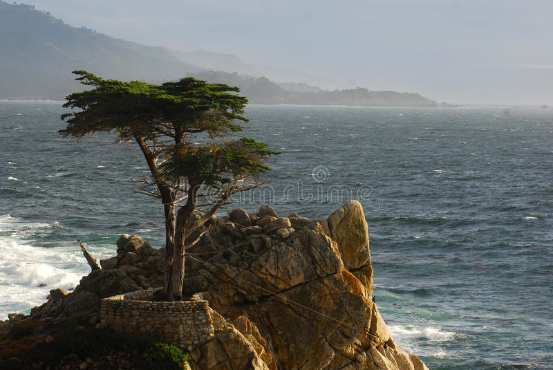 Uma árvore de Cypress no louro de Monterey fotografia de stock royalty free