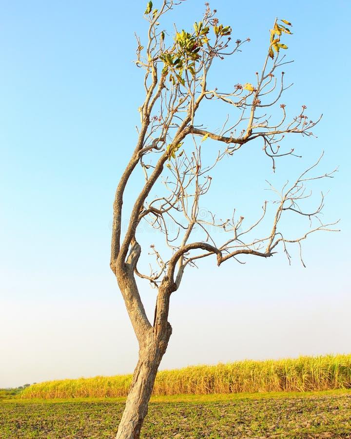 Uma árvore de morte fotos de stock