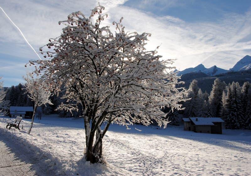 Uma árvore de Natal coberta com a neve nas dolomites italianas imagens de stock