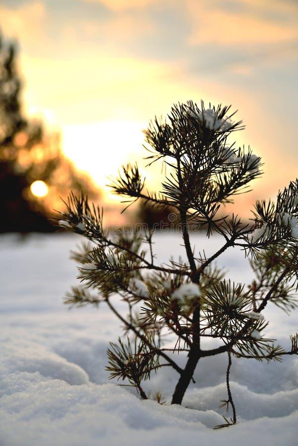 Uma árvore de Natal pequena na neve contra o contexto do s fotografia de stock